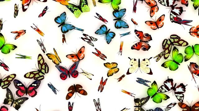 butterflies background video