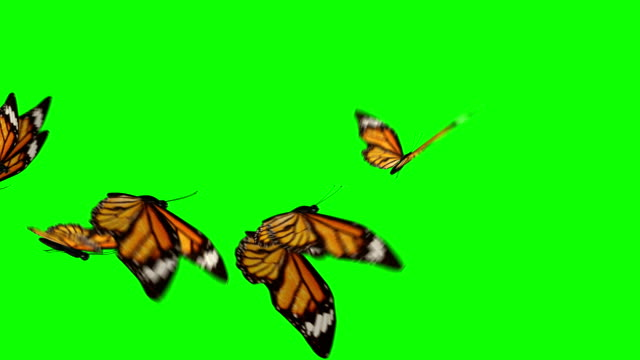 Butterflies flock flying left to right video