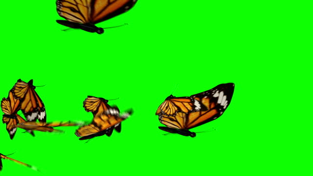 butterflies flock flying left to right - butterfly stock videos and b-roll footage