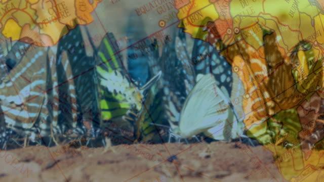 butterflies flock video