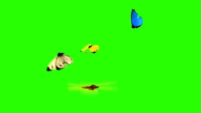 motyle latać do kamery na zielonym tle - zielony kolor filmów i materiałów b-roll