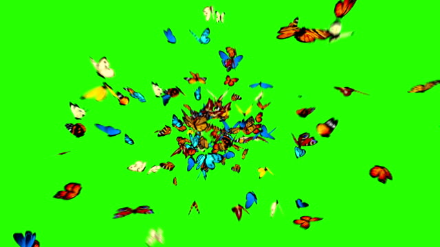 butterflies fly to the camera - butterfly stock videos and b-roll footage