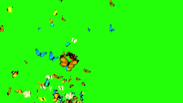 butterflies flying on a green background - butterfly stock videos & royalty-free footage