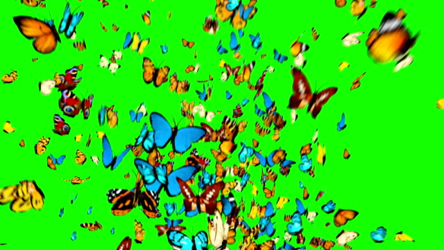 butterflies flying on a green background - butterfly stock videos and b-roll footage