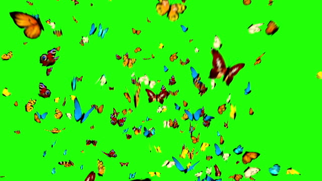 Butterflies Flying on a Green Background video