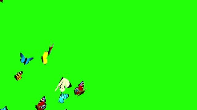 Yeşil bir arka plan üzerinde uçan kelebekler video