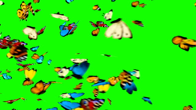 Butterflies Flying on a Green Background Butterflies Flying on a Green Background. 3d animation, Full HD butterfly insect stock videos & royalty-free footage