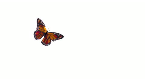 Butterflies Flying Butterflies flying on white background. anxiety stock videos & royalty-free footage