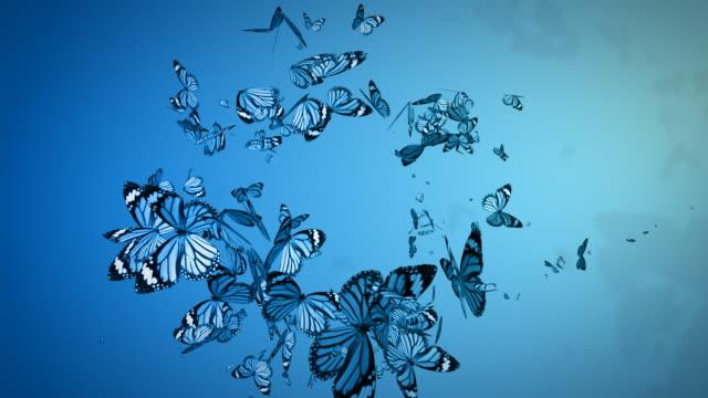 Butterflies - HD, Loop