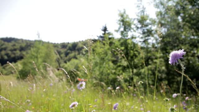 Butterflies in the summer video
