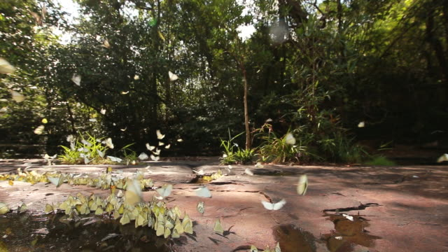Butterflies on the shore of a small lagoon video