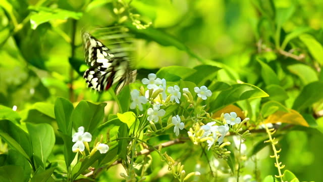 Butterfly  and  flower in the garden