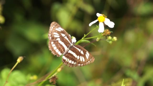 butterfly and flowers in the afternoon sun - pistillo video stock e b–roll