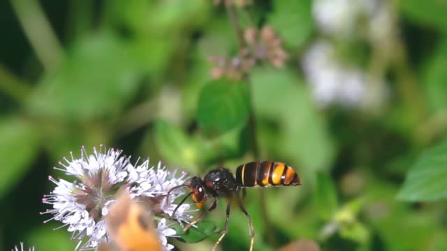 Butterfly and hornet wasp video