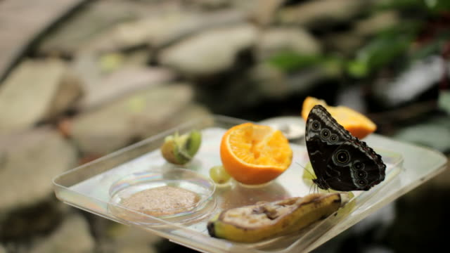 butterfly and orange video