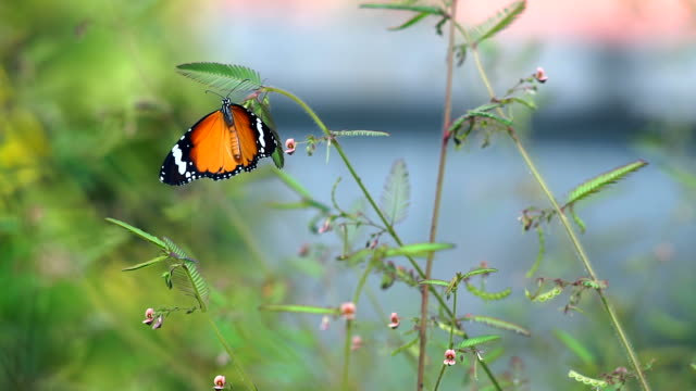 butterfly and plants. - pistillo video stock e b–roll
