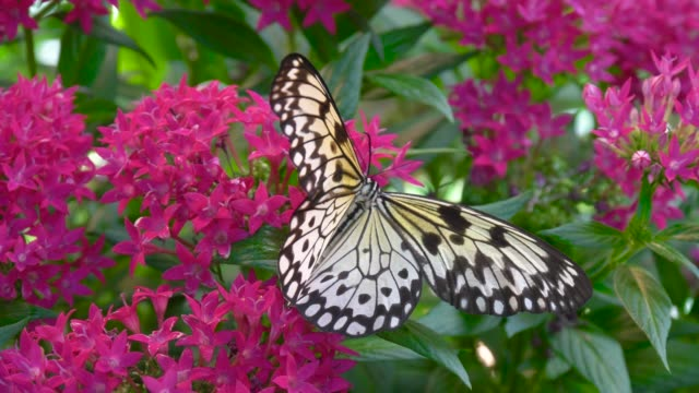 Butterfly and Tropical Flower video