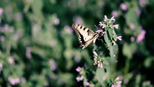 farfalla. la farfalla vola vicino ai fiori - farfalla ramo video stock e b–roll