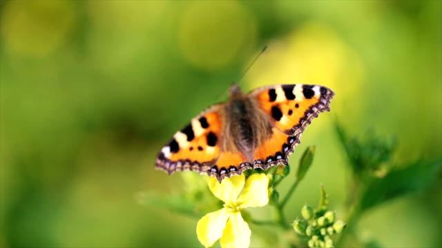 Butterfly closeup on a flower in slow motion