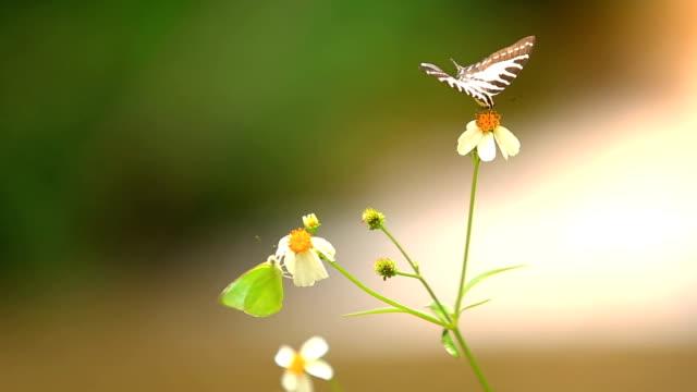 butterfly eating pollen of beautiful flower. - дикая растительность стоковые видео и кадры b-roll