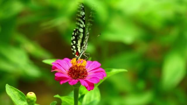 Butterfly Feeding On Pink Flower Sunlit Garden