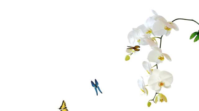 Butterfly flying - alpha, loop video