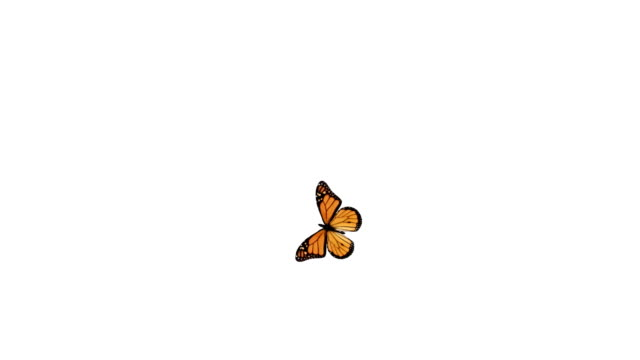 butterfly flying around and landing. - butterfly stock videos and b-roll footage