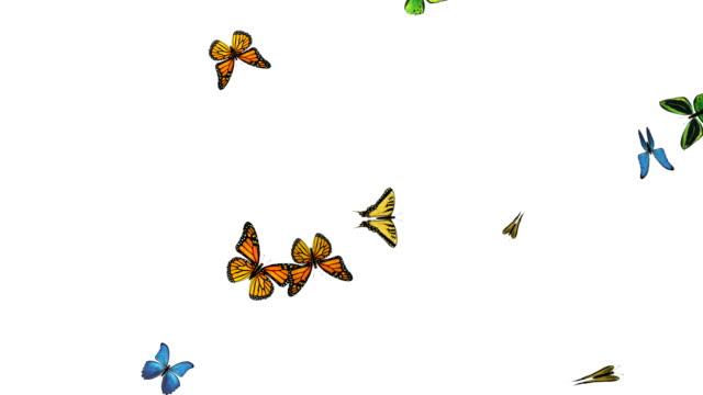 Butterfly flying in slow motion – alpha + loop video
