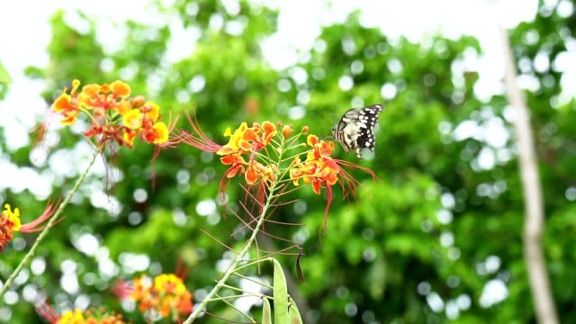 Butterfly flying. Slow motion butterfly flying catching red flower.