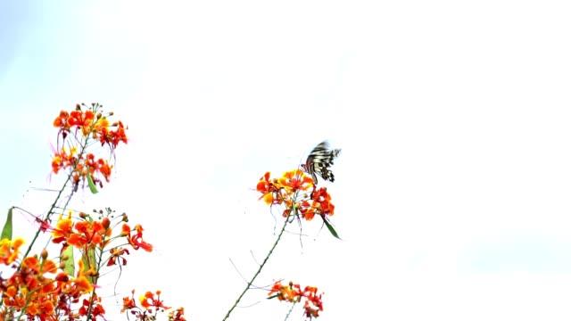蝶が飛んでる赤い花をキャッチするスローモーション蝶が飛んでいく。 ビデオ