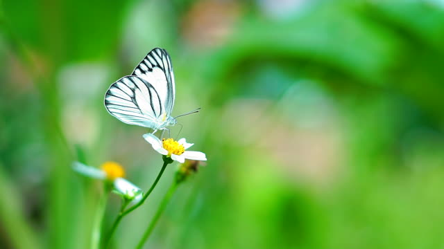 Butterfly flying slow motion on natural green background. - vídeo