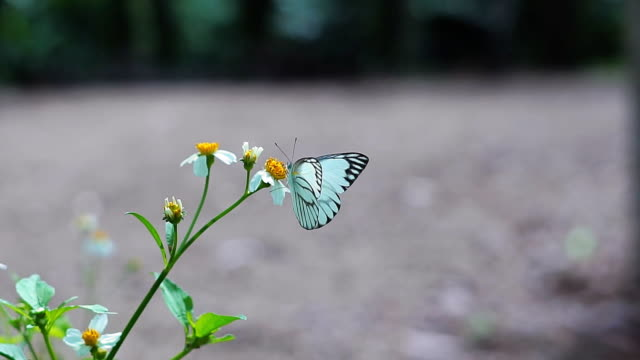 Butterfly flying slow motion on natural green background. video