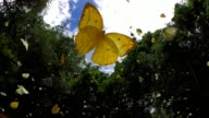 istock butterfly flying slow motion 1246120588