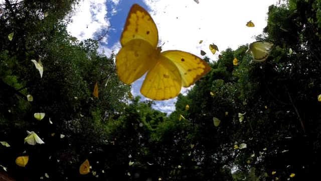 butterfly flying slow motion