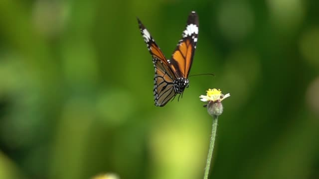 Butterfly flying slow motion video