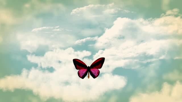 stockvideo's en b-roll-footage met butterfly free - arthropod