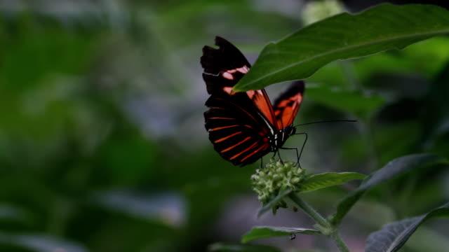 farfalla hd 1080 - arto inferiore animale video stock e b–roll