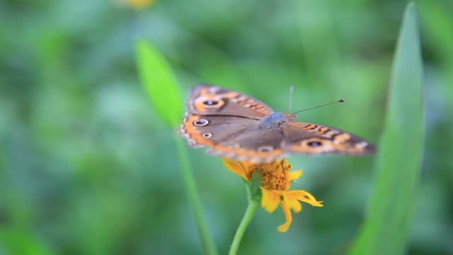 地域ルアルブルの蝶 - 自生点の映像素材/bロール