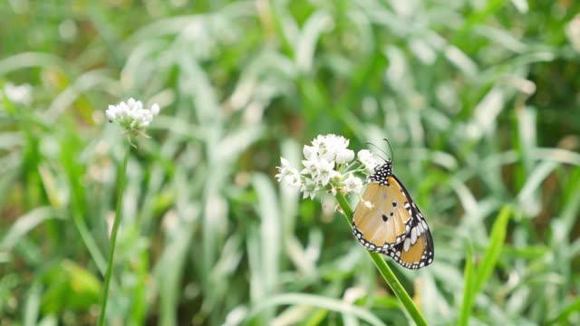 Butterfly in flower field