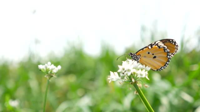 Butterfly in flower field video