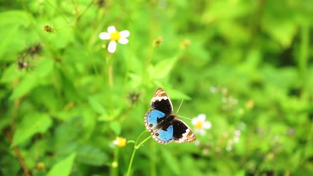 butterfly in meadow.