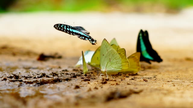 Butterfly in the rain forest.Slow motion. Butterfly in the rain forest.Slow motion. butterfly insect stock videos & royalty-free footage