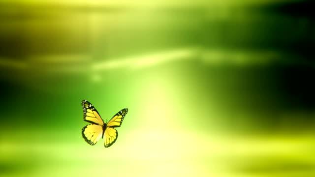 Butterfly landing with Luma / Alpha Matte (green) - Loop video