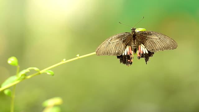 Butterfly on a stick video