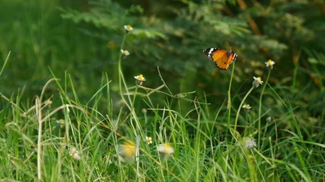 farfalla sull'erba di fiori - farfalla ramo video stock e b–roll