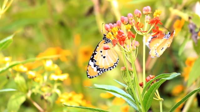 Butterfly on flower in the garden video