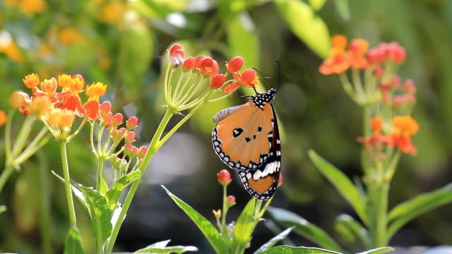 stockvideo's en b-roll-footage met butterfly on flower - fresh start yellow