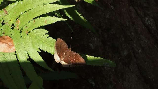 Butterfly on leaf fern
