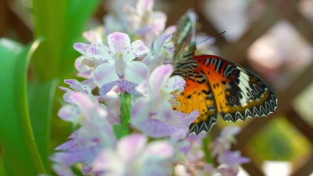 Butterfly On Purple Orchid