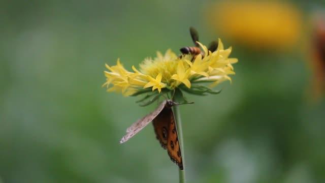 vídeos de stock e filmes b-roll de butterfly on the flower - flower white background